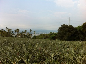 Pinapple Fields.