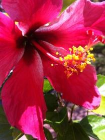 Bursting Flowers