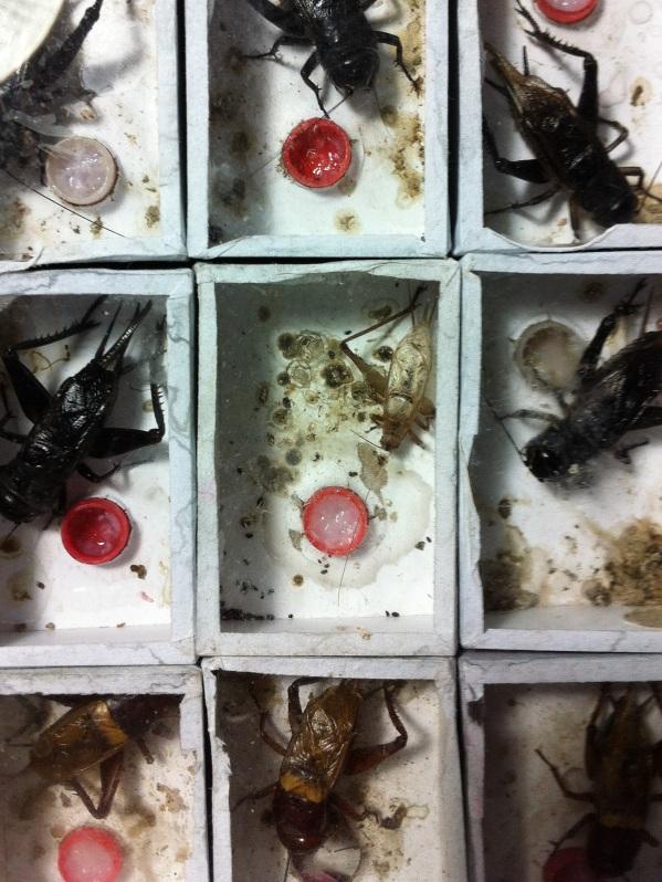 Boxed Bugs Shanghai