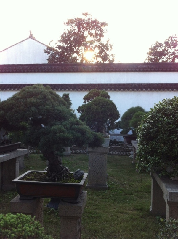Bonsai in the late afternoon, Suzhou
