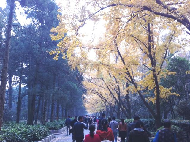 nanjing trees